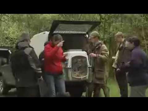 Beavers Reintroduced into Scotland