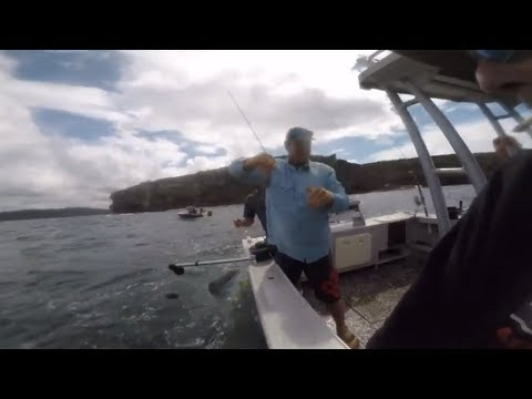 Learning How To Catch, Fillet And Cook Sydney Harbour Kingfish. (Part 2 Raptor Charters)