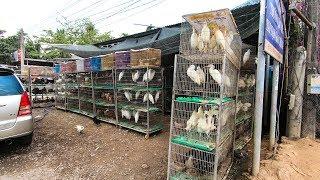 Chợ Chim Cò trên quốc lộ 60 đường về Miền Tây