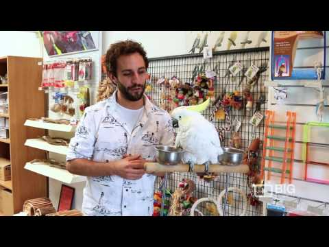 Bird City a Pet Store in Melbourne offering Parrot and Pet Birds