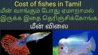 மீன் விலை தெரிஞ்சிகோங்க ஏம்மாரதிங்க Price of Fishes in tamil / Fish Aquarium Tamil