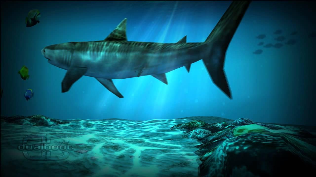 Hd Great White Shark Wallpaper Shark Pack For Ocean Hd Live Wallpaper Youtube