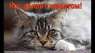 Кот дышит животом