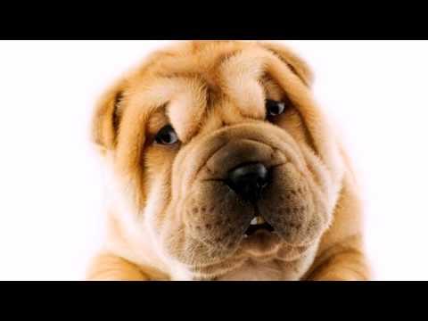 Maticulous - Youtube Intro - TALKING DOG #GetAffiliated