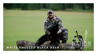 WISCONSIN BEAR Bow Hunt - Bayfield Co - WHITE CHESTED Black Bear!