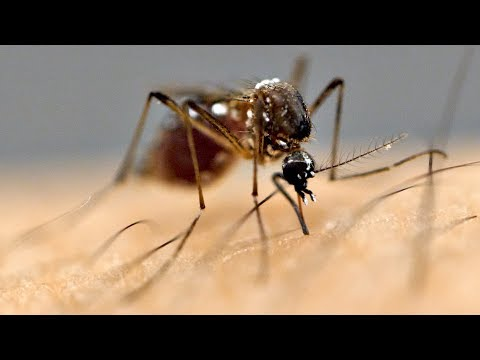 Why Are Mosquitoes Attracted To Me?!