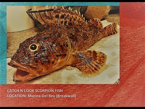 Catch And Cook Scorpion Fish