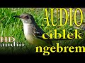 Suara Ciblek Ngebrem Speed Rapet Cimblek Nembak Ak  Joss  Mp3 - Mp4 Download