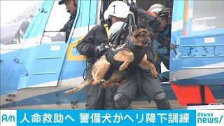 警備犬のヘリ降下訓練 災害現場で被災者捜索(19/12/10)