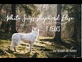 3 years of adventures with Elise - |White Swiss Shepherd Elise| の動画、YouTube…