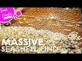 SECRET SEASHELL SPOT IN DESTIN FLORIDA...MASSIVE FIND!! | Scott and Camber