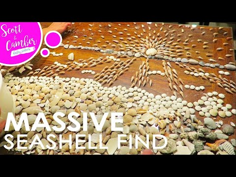 SECRET SEASHELL SPOT IN DESTIN FLORIDA...MASSIVE FIND!! | Scott and Camber