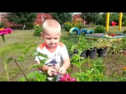 Сашуля юный садовник