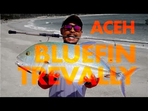 ACEH ultralight casting bluefin trevally (Up 4Kg)