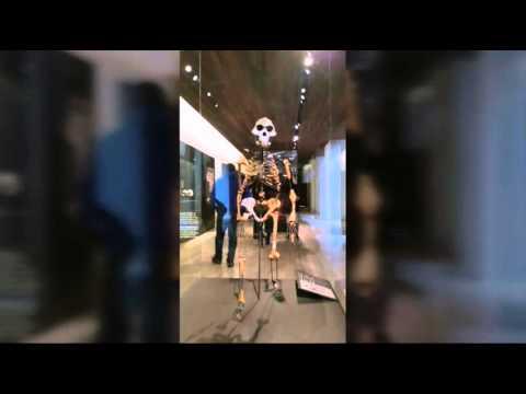 ¿Quién es Lucy? La Australophitecus Afarensis de 3,2 m.a.