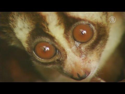 Приют спасает диких животных, отобранных у контрабандистов  (новости)