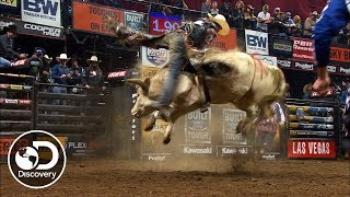 How to Become an American Bullfighter