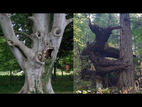 CREEPIEST Trees in the World