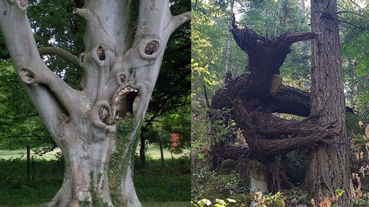 creepiest trees in the