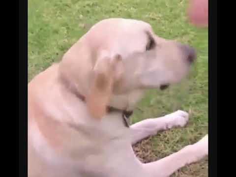 MadLipz:  Dog Whisperer Attacked. #1