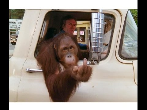 Image result for clint eastwood orangutan