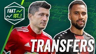 Lewandowski nach Manchester? Bayer Leverkusen leiht Stürmer aus! Fakt ist..! Transfer Spezial