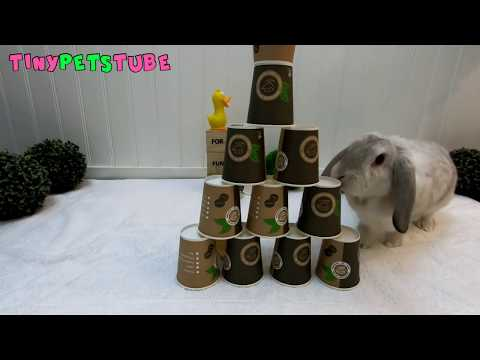 Cute and funny animal videos from TinyPetsTube