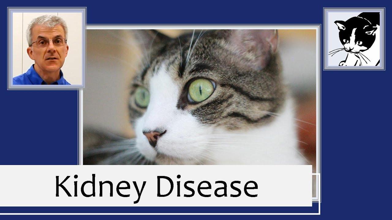 Chronic Kidney Disease In Cats 2013 Youtube