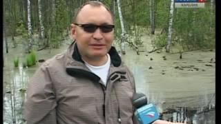 Строительные работы могут привести к гибели уток в Петрозаводске