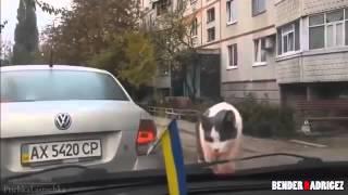Подборка приколов про животных 2016 №19
