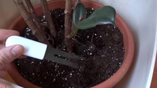 Recensione Xiaomi Mi Plant monitor. Controlla se la tua pianta è in salute!