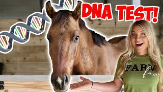 DNA TESTING MY HORSE! *WOW*