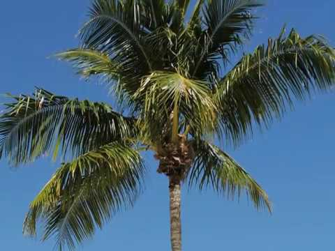 Palm Sunday Background With Music Youtube