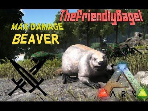 Ark max melee damage beaver youtube ark max melee damage beaver malvernweather Choice Image