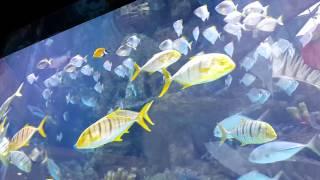 Рыба невеста