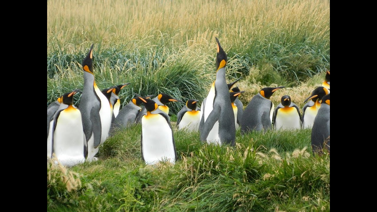 Penguin Adaptations for Survival in Antarctic Climates