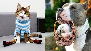 Best Funny Cute Cats And Dogs Video Compilation #42 | Funny Pets Life