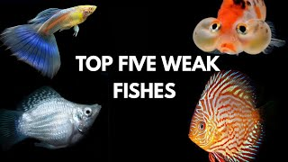Very Worst Fish for Beginners... Avoid it