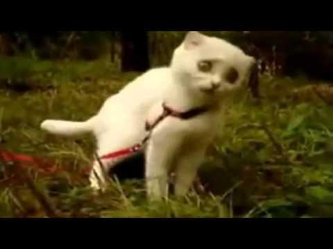 Большие глаза кота