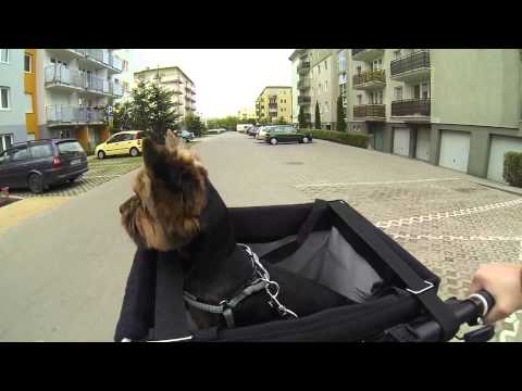Trixie Front-Box bike basket gopro