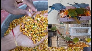 Soft Foods Parrots and Birds / How To Make Appropriate Soft Foods For Birds and Parrots. screenshot 2