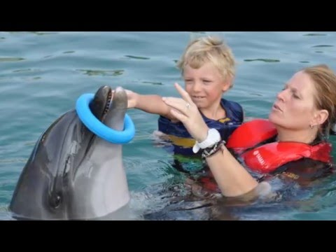 Dolphin Therapy in Marmaris