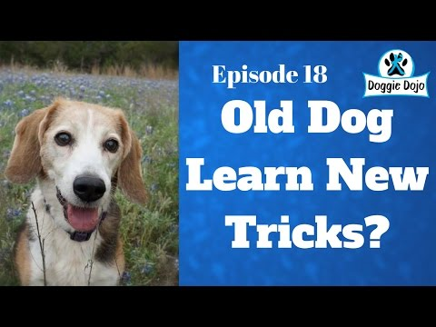 Can Old Dogs Learn New Tricks? - Dog Training Life - VLOG 29