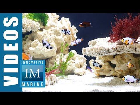 NUVO EXT Silent Overflow Aquarium By Innovative Marine