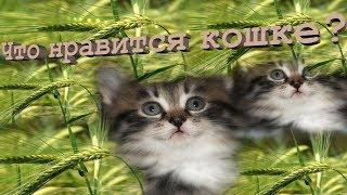 Что нравится кошке? #Прикольное видео про кошек #Приколы с кошками #Funny cats #LUCKY(Кошке нравится быть принцессой, Восседать на шкафу, как на троне, Наблюдать за каждым процессом, Что с утра..., 2014-09-28T10:56:13.000Z)