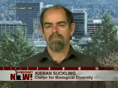 Kieran Suckling of Center for Biological Diversity on Lessons Not Learned From BP Oil Spill. 1 of 2
