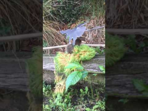 Haast eagle project 3