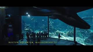 Aquaman controls the fishes best hollywood Tamil dubbed scenes.