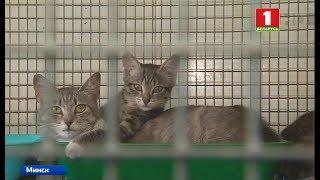 Новые правила по содержанию безнадзорных кошек и собак готовят в Беларуси