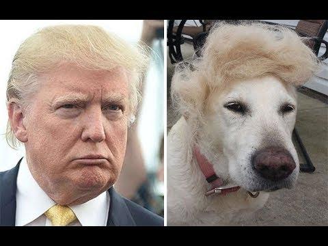 الكلاب تشبه أصحابها
